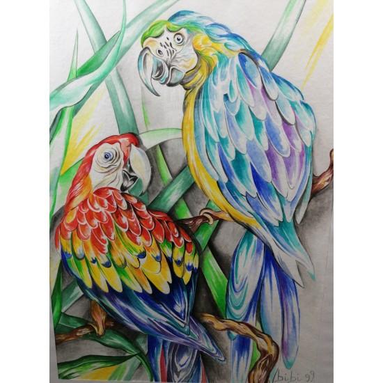 Curious Parrots watercolor cm 40*50